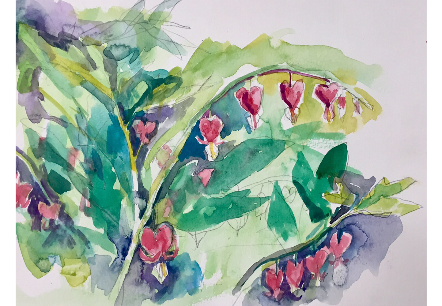 Bleeding Heart, watercolor