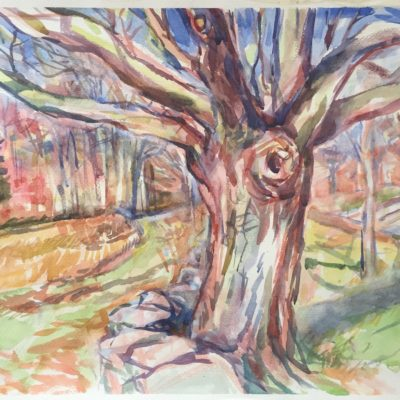 Oak Tree watercolor,16 x 23