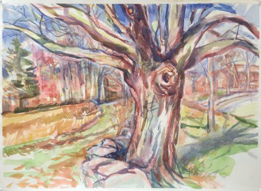 Oak Tree watercolor,16 x 23