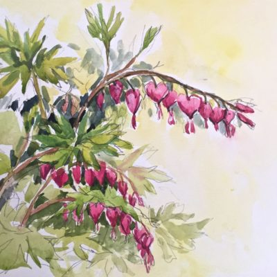 "Bleeding Hearts, watercolor,9""x11"""