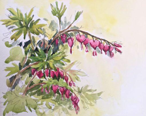 "Bleeding Hearts, watercolor,9""x11"""