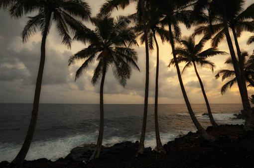 Sunset palms 17 mile