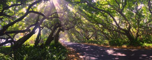 Tree TUnnel photo