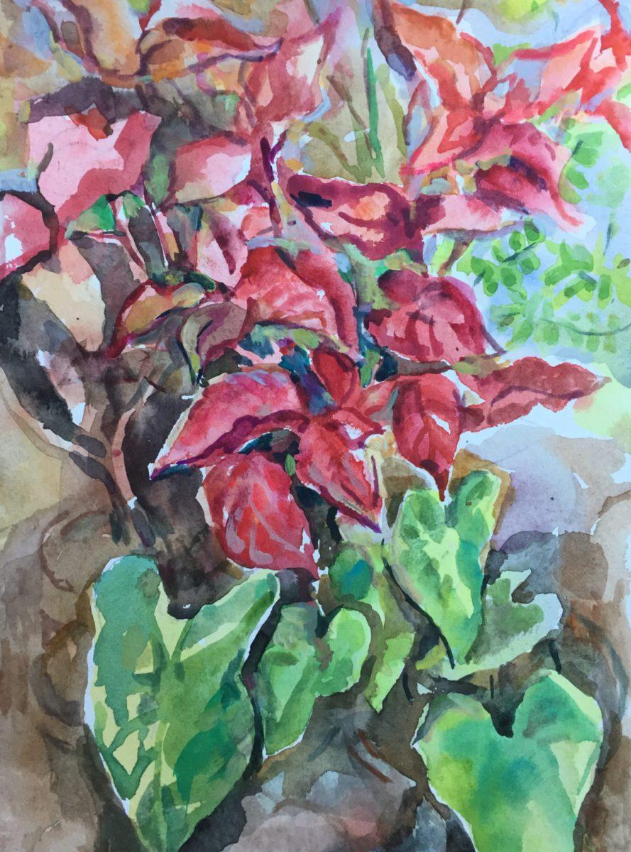 heart plants  watercolor by abbie rabinowitz  15 u0026quot x11 u0026quot   art