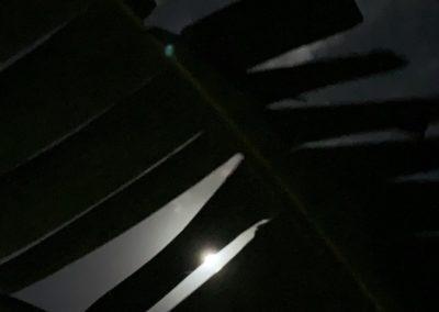 moonlight palm frond photo