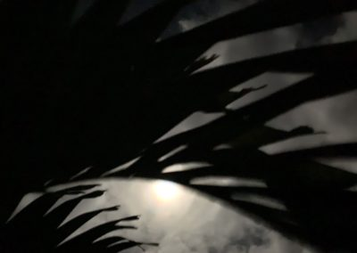 moonlight frond photo