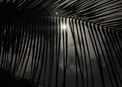 moonlight palm frond photo